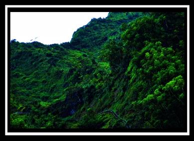 Stairway To Heaven- Ha'iku Valley Ladder-