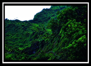 Stairway To Heaven- Ha'iku Valley Ladder-